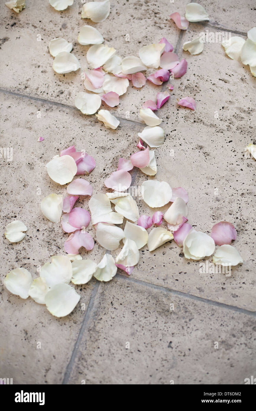 Fresh organic confetti, natural pink dried rose petals on the ground. Traditional wedding custom. - Stock Image