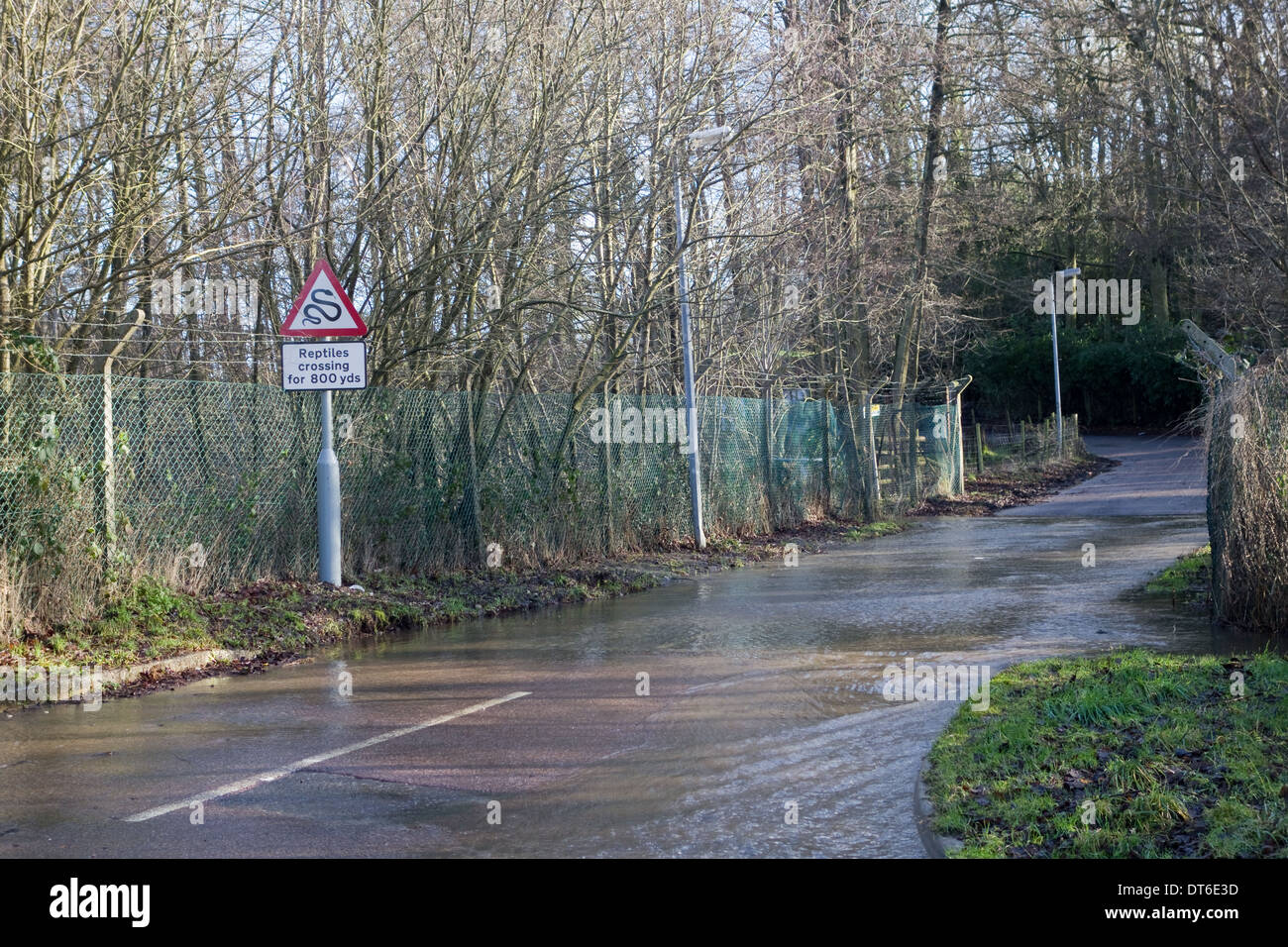 Reptiles Crossing Sign on Flooded Road - Stock Image