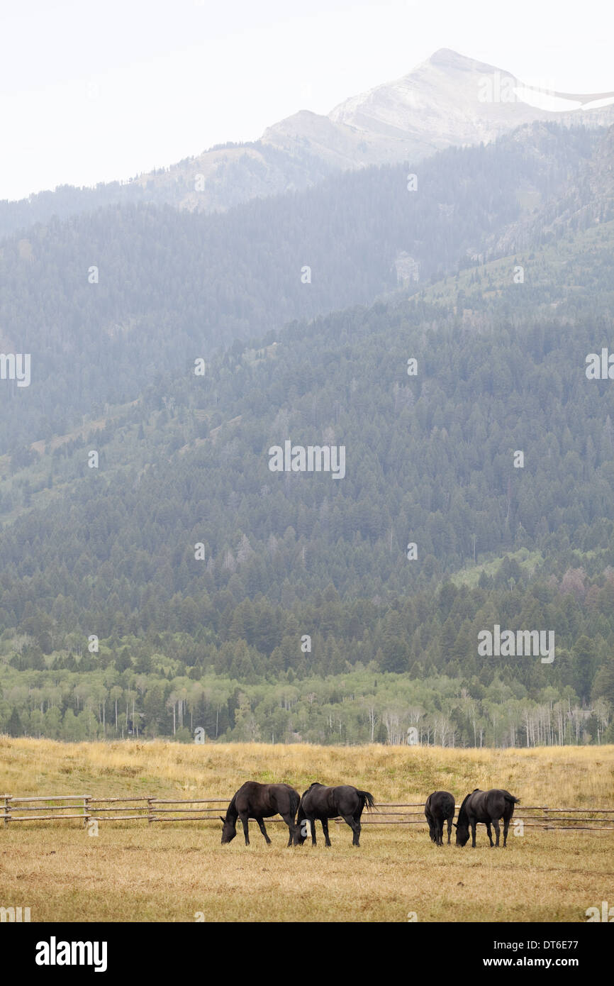 A small herd of horses, grazing on the plains, with a backdrop of mountains with snowcapped peaks. - Stock Image