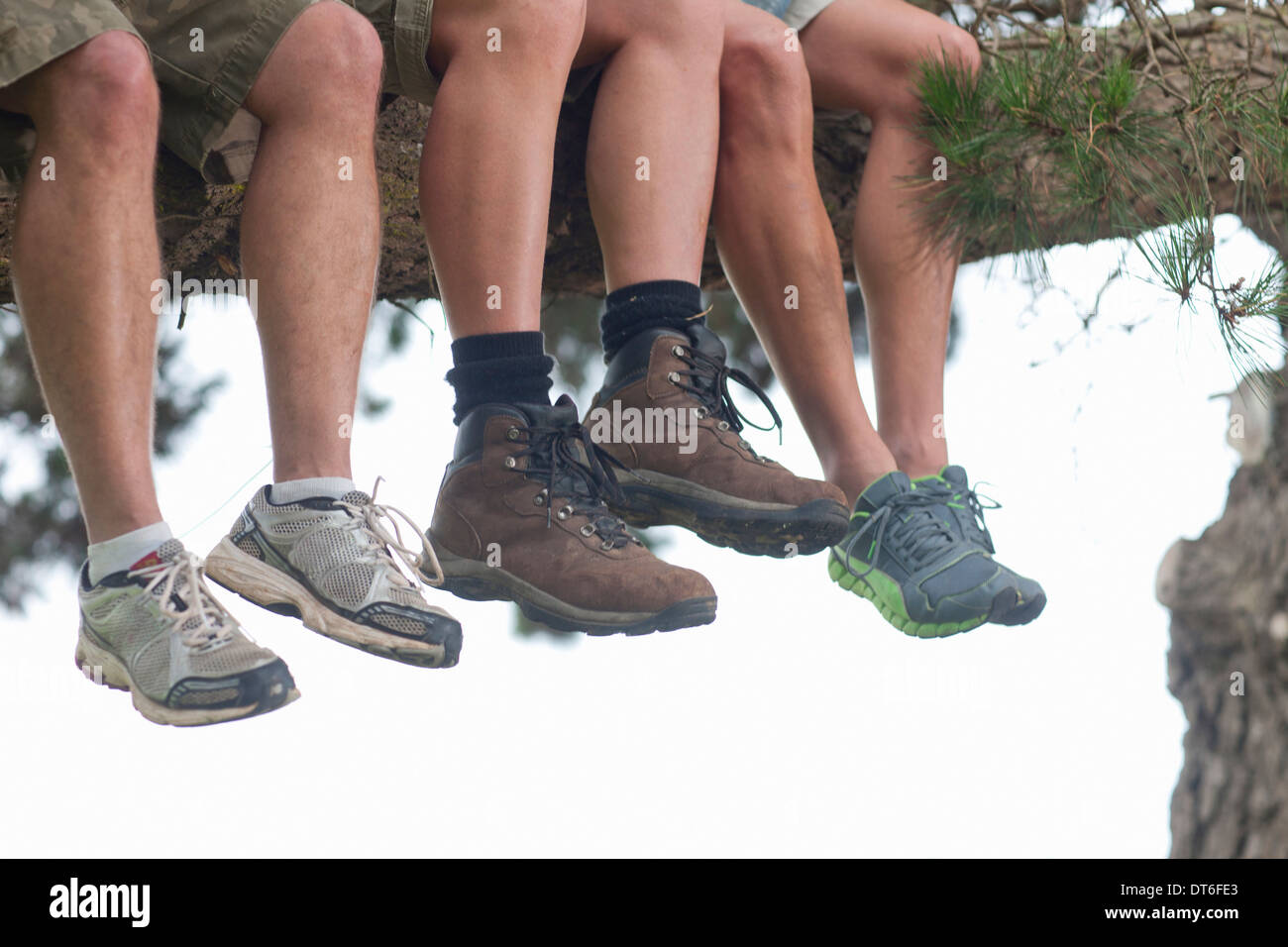 Legs of three male hikers sitting on tree branch - Stock Image