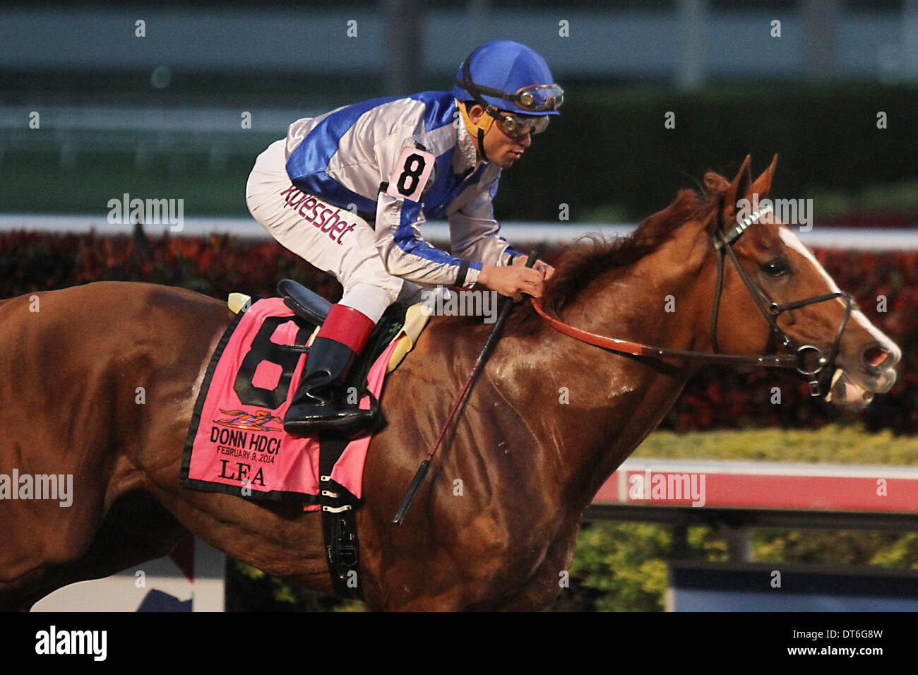 Hallandale Beach, Florida, USA. 9th Feb, 2014. Lea with Joel Rosario up on their way to winning the Donn Handicap(G1) at Gulfstream Park, Hallandale Beach Florida. 02-09-2014 © Liz Lamont/Eclipse/ZUMAPRESS.com/Alamy Live News - Stock Image