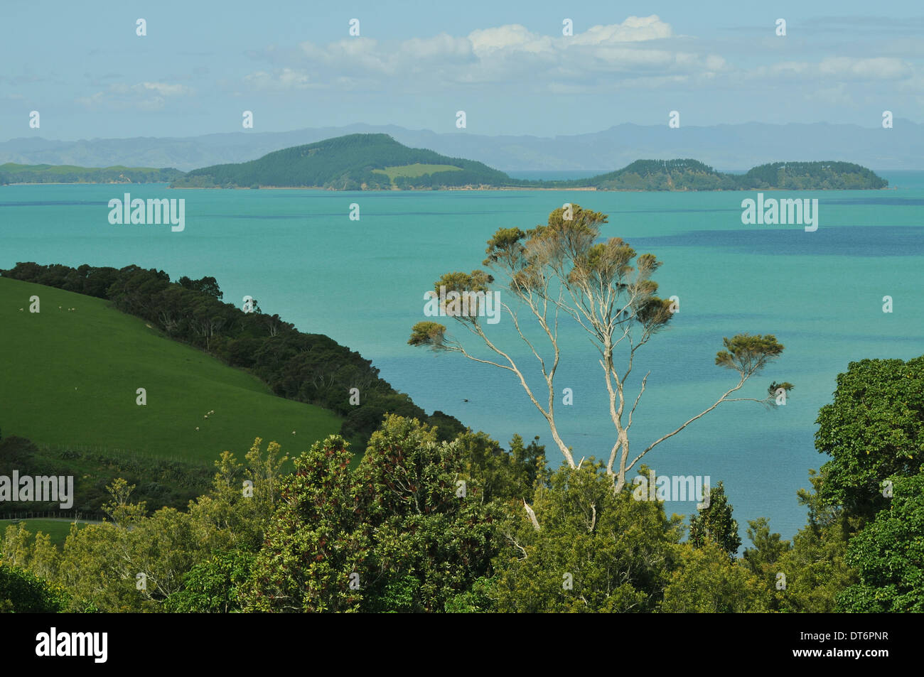 Hauraki Gulf view from Duder Regional Park near Auckland, New Zealand - Stock Image