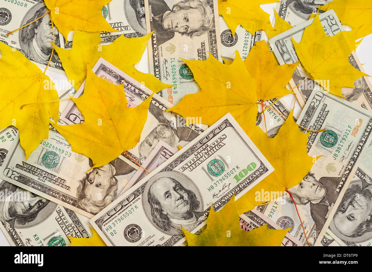 Dollar notes littered up among autumnal yellow maple leaves - Stock Image