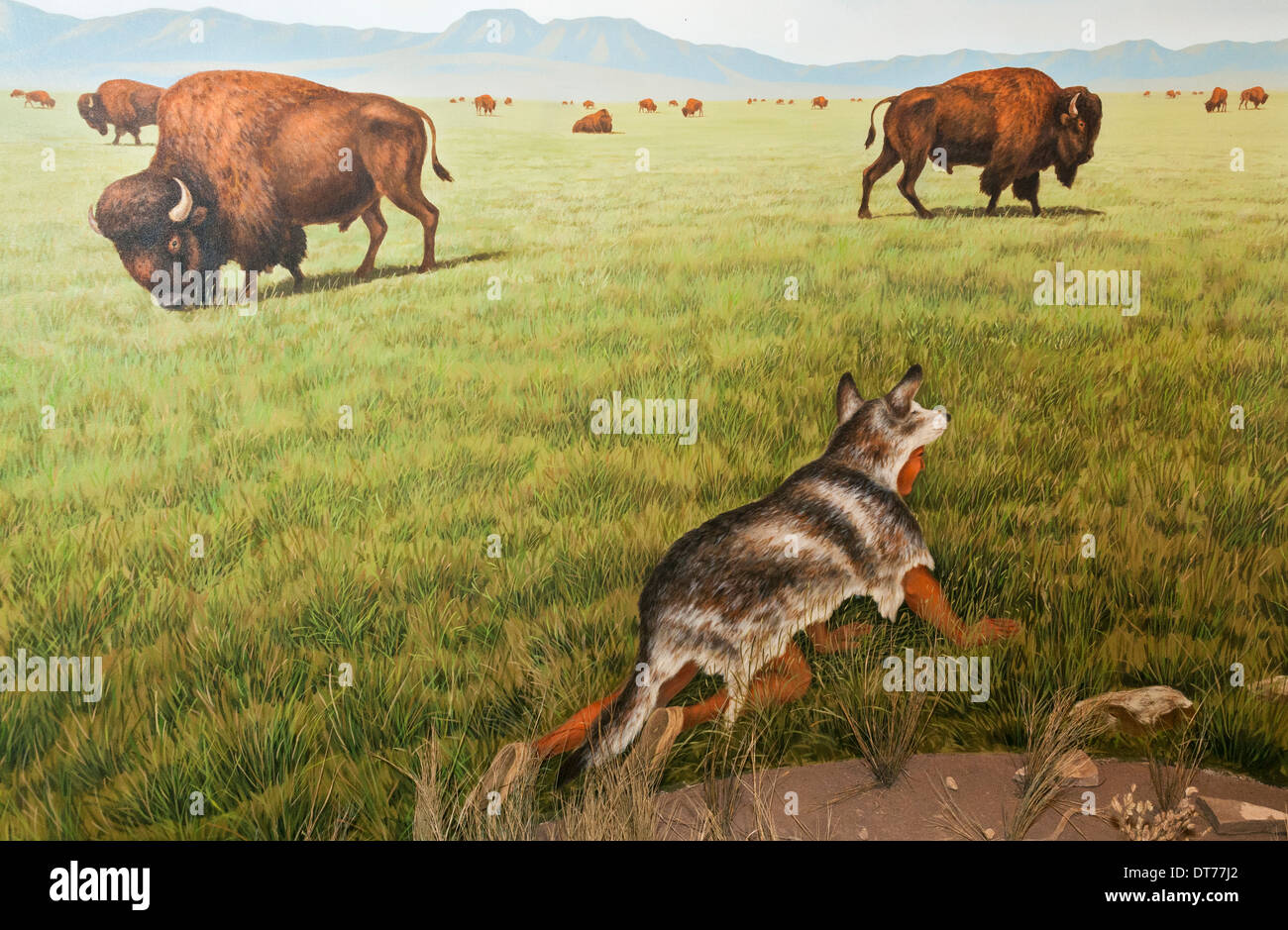 Montana, Ulm, First Peoples Buffalo Jump State Park, Visitor Center, hunting diorama - Stock Image