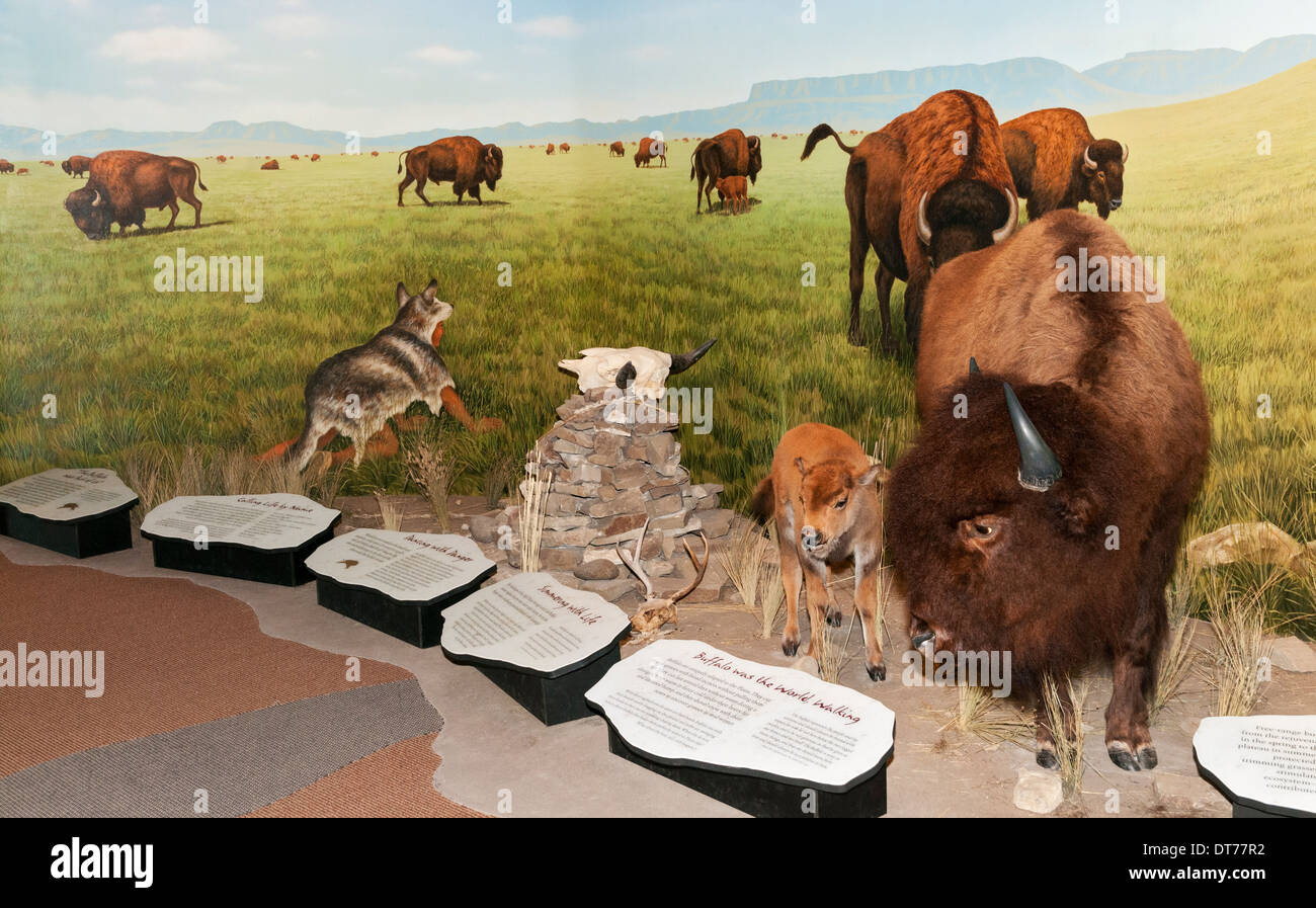 Montana, Ulm, First Peoples Buffalo Jump State Park, Visitor Center, Bison hunting diorama - Stock Image