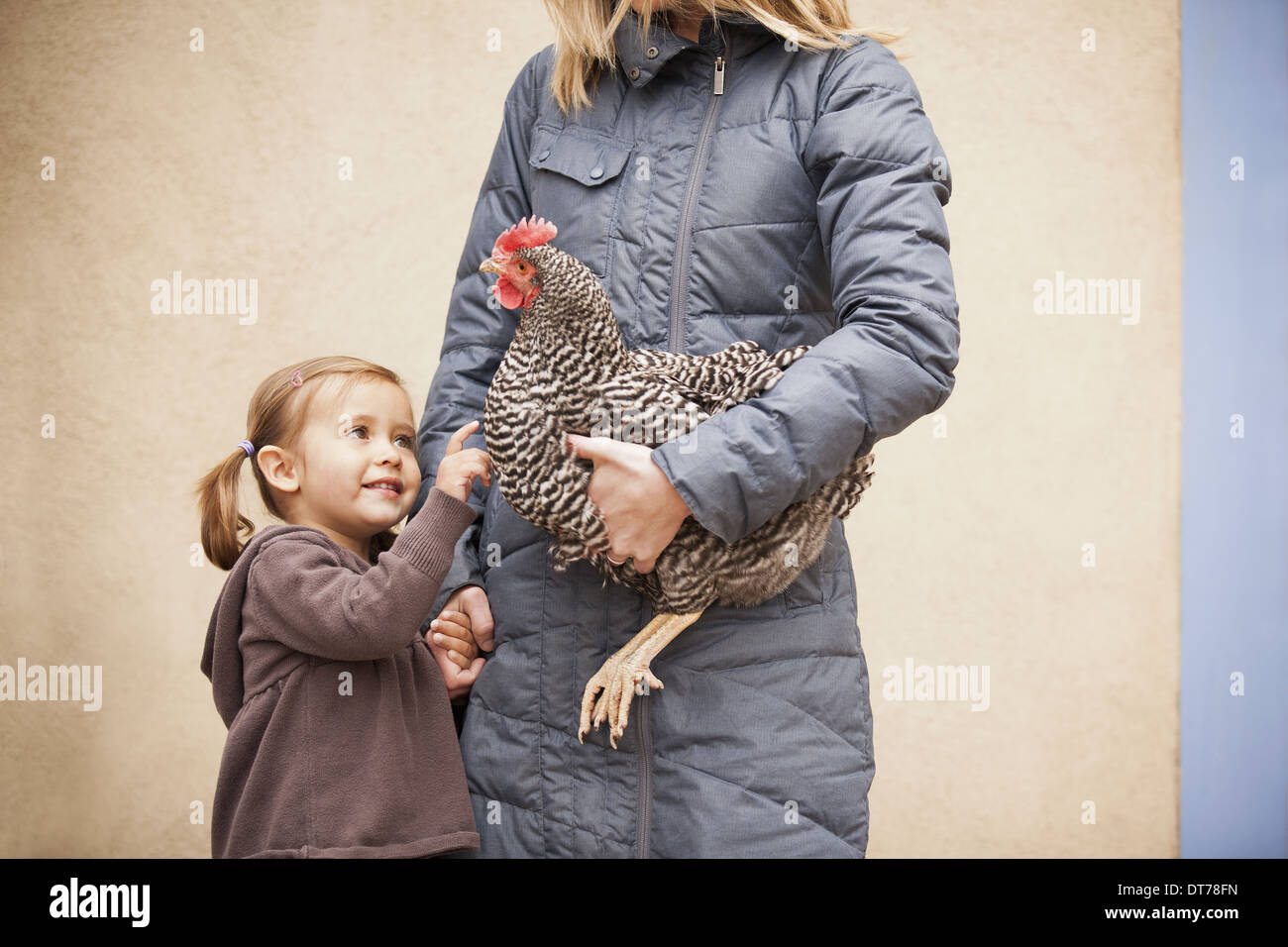 A woman in a grey coat holding chicken with a red coxcomb under one arm. A young girl beside her holding her other hand - Stock Image