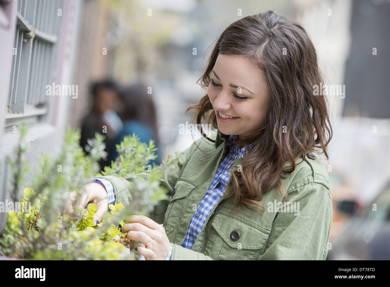A woman tending a window box on a city street. Spring flowers. - Stock Image