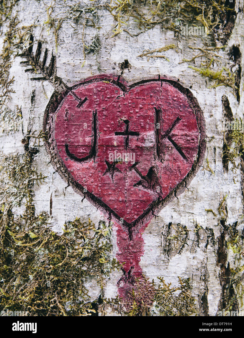 J K And Heart Symbol Carved In Moss Covered Alder Tree Olympic Np
