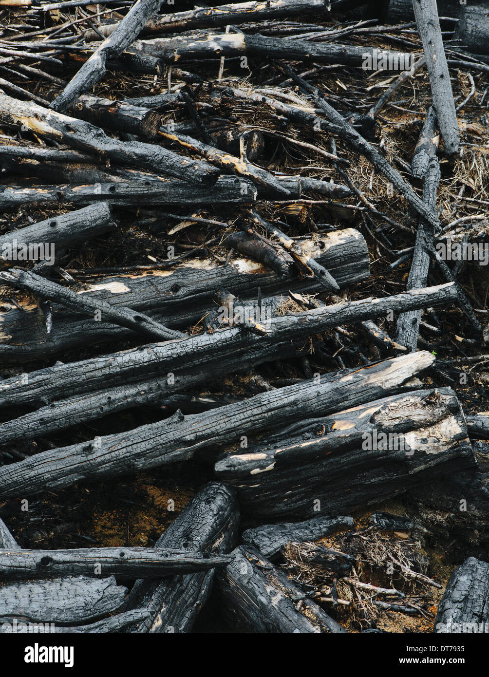 Burned logs and debris from clear cut forest, Olympic NF - Stock Image