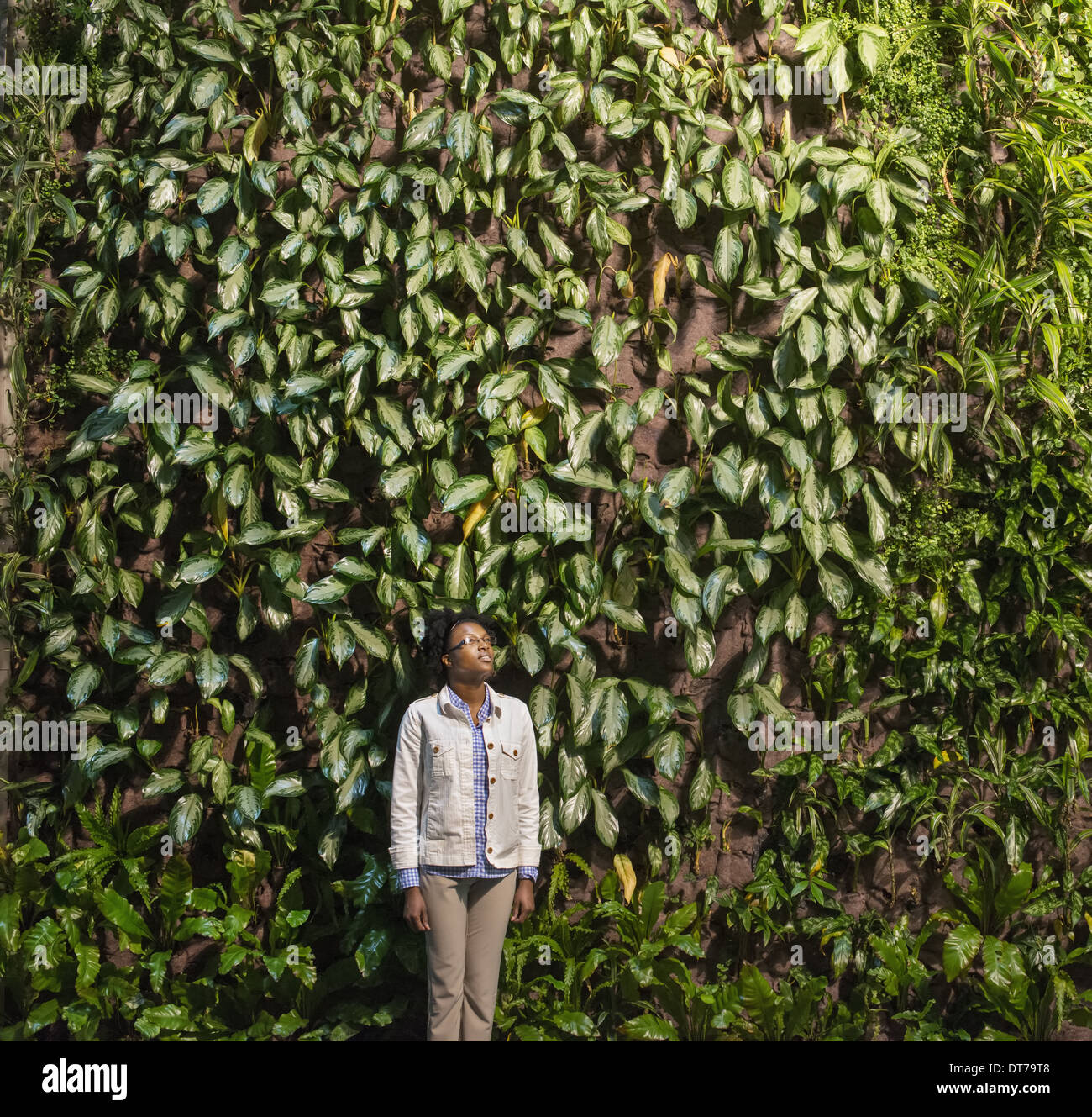 A woman looking up at a high wall covered in climbing plants and foliage. - Stock Image