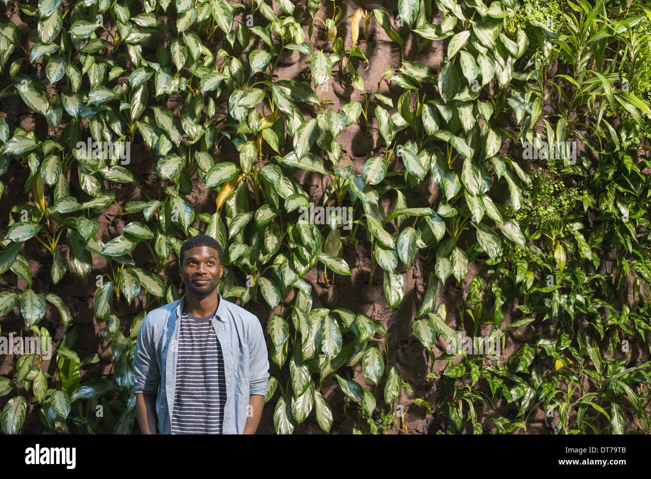 A man standing in front of a wall covered in climbing plants and ivy. - Stock Image