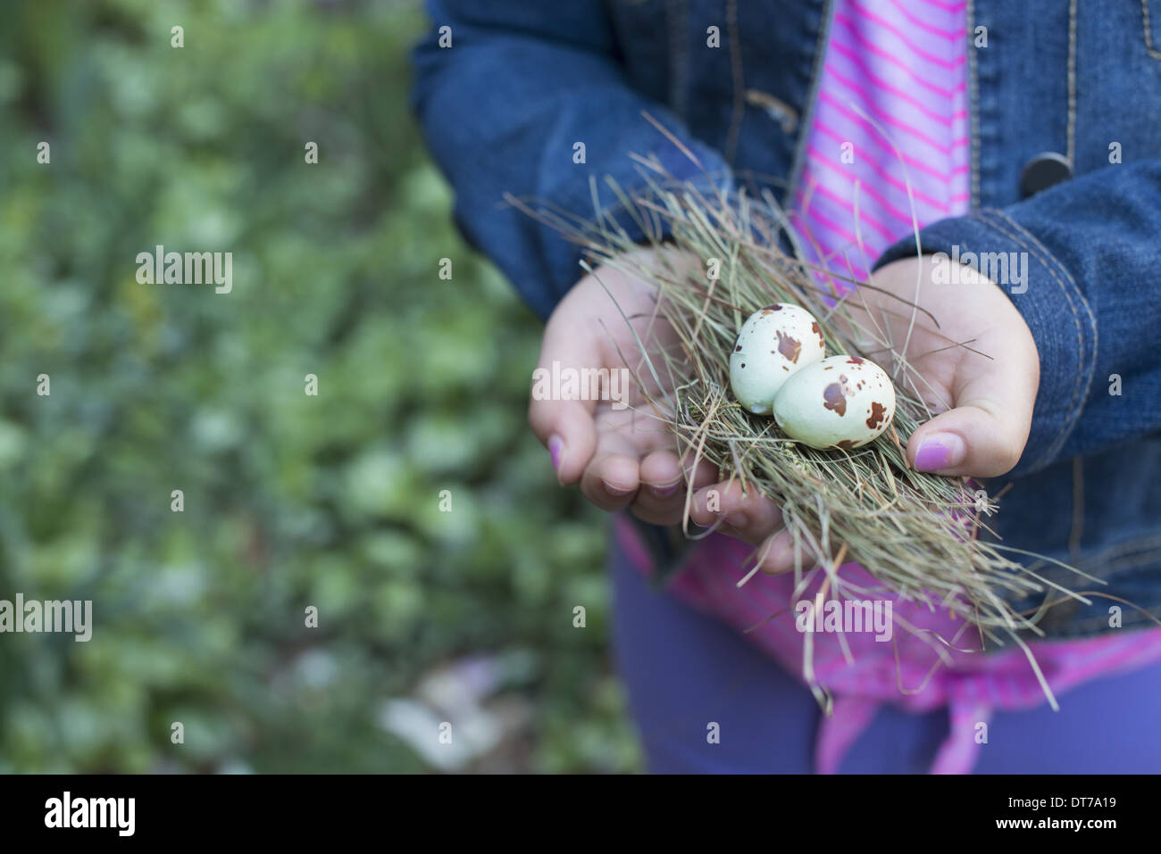 A girl holding out cupped hands, with a small bunch of twigs and two bird's eggs. - Stock Image