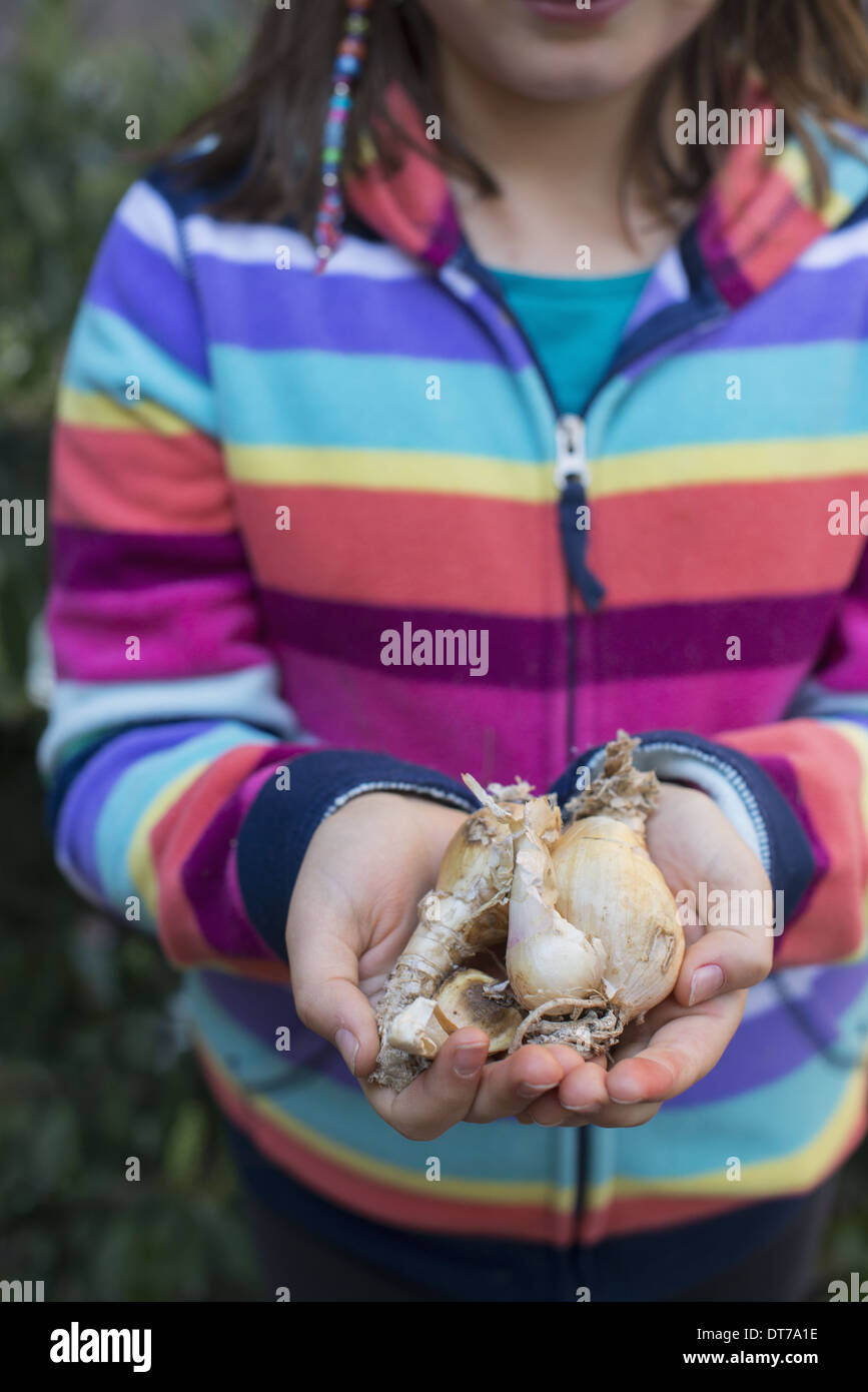 A young girl holding a small number of plant bulbs in her cupped hands. - Stock Image