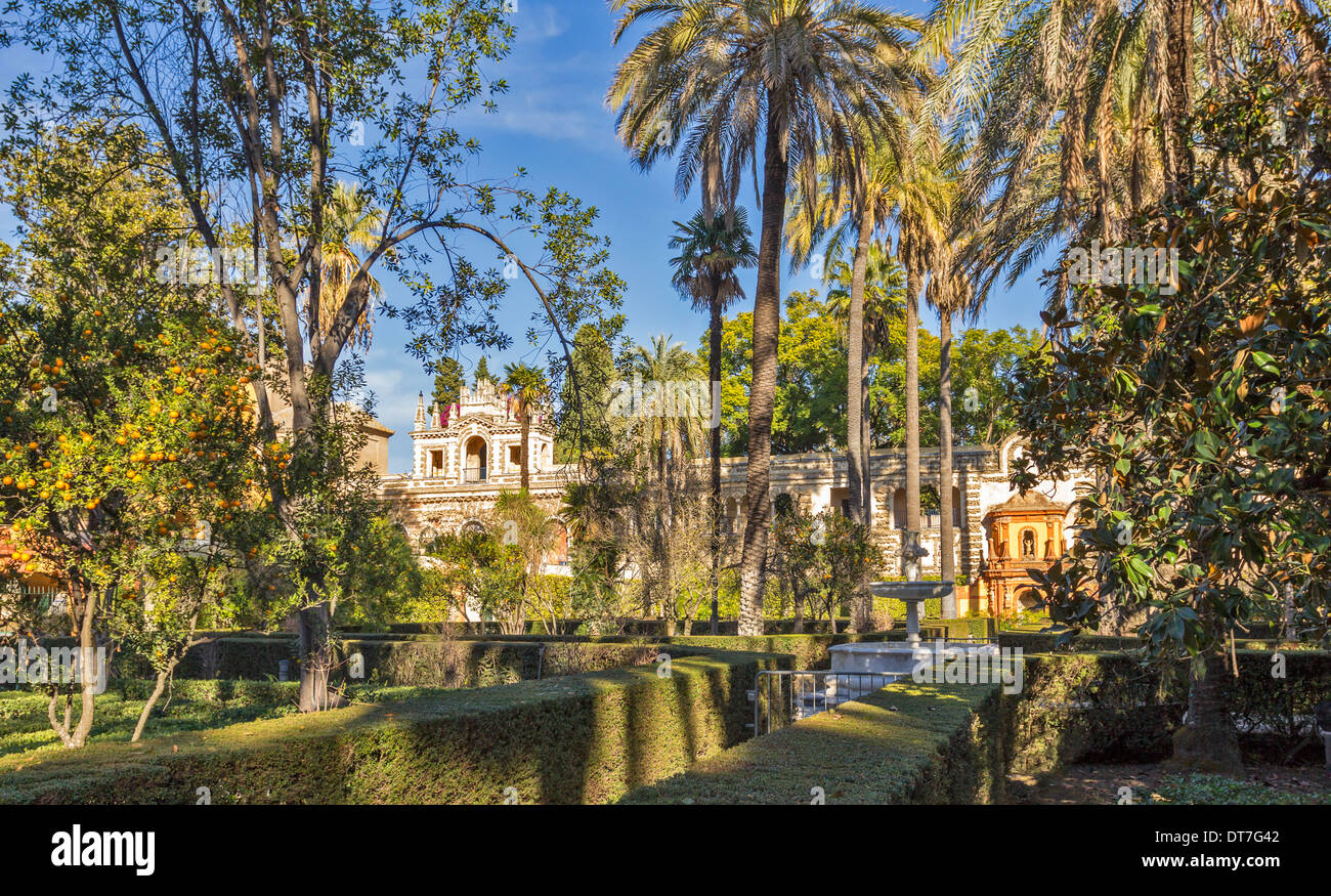 ALCAZAR OF SEVILLE SPAIN THE GARDENS WITH PALM TREES AND ORANGES ON TREES IN DECEMBER - Stock Image