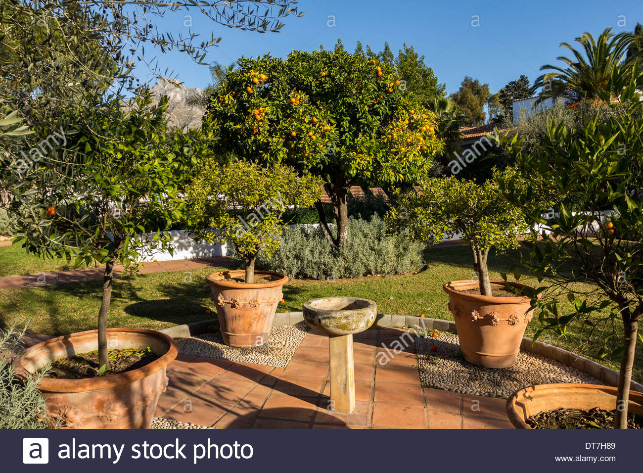 MARBELLA CLUB HOTEL SPAIN THE GARDENS WITH ORANGE TREES OLIVES AND ...