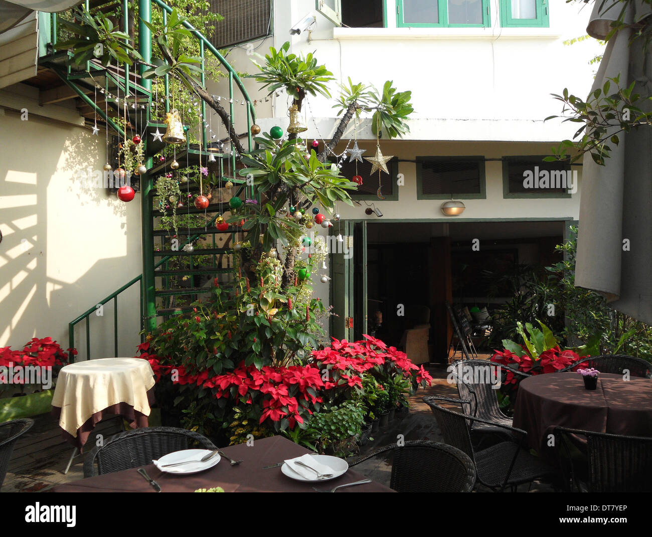 poinsettia and christmas decoration on the terrace of the restaurant stock photo 66558094 alamy. Black Bedroom Furniture Sets. Home Design Ideas