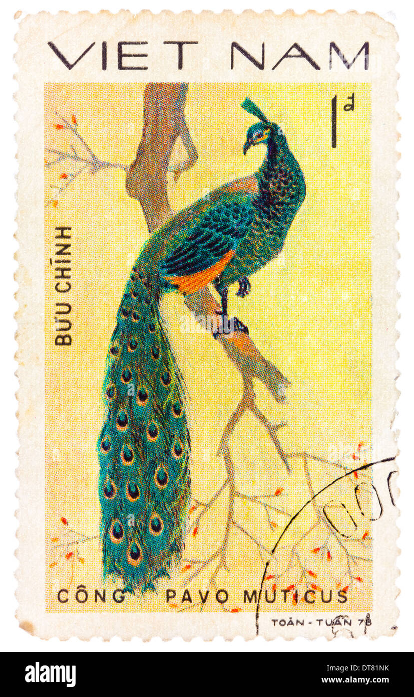 stamp printed in Vietnam shows Pavo muticus or green peafowl, series devoted to the ornamental birds - Stock Image