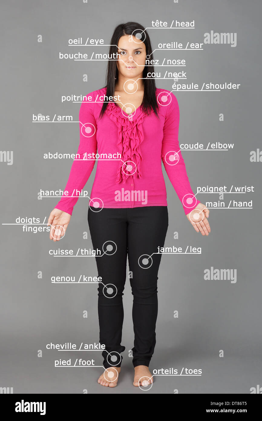 Human anatomy or body: woman posing on grey with french and english words - Stock Image
