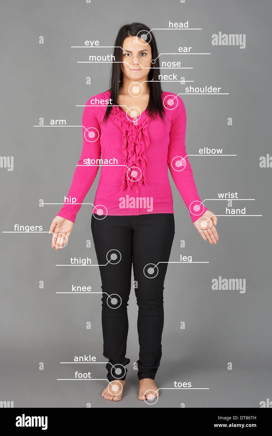Human anatomy or body: woman posing on grey background - Stock Image