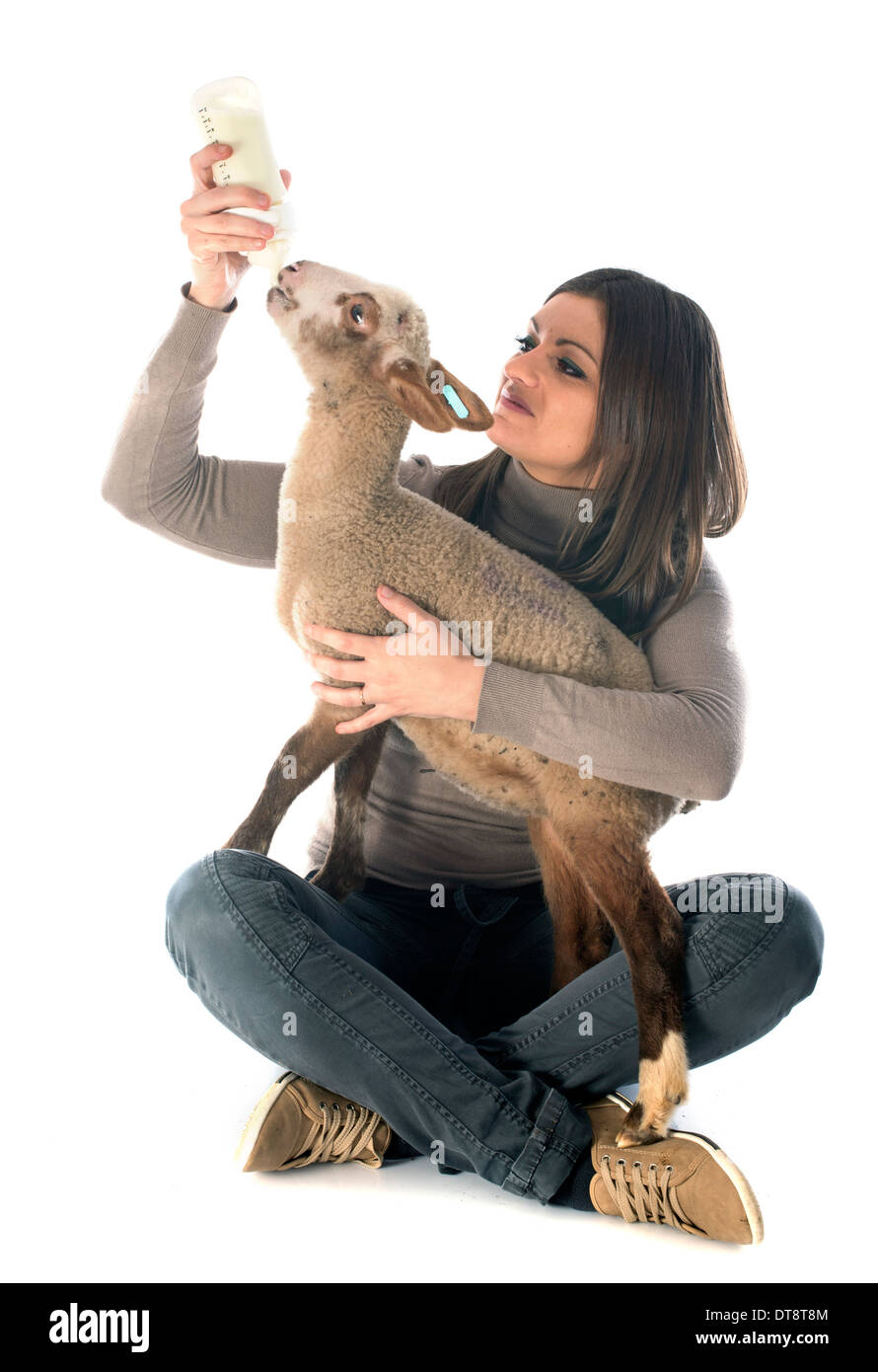 young lamb sucking a bottle feed with woman in front of white background - Stock Image
