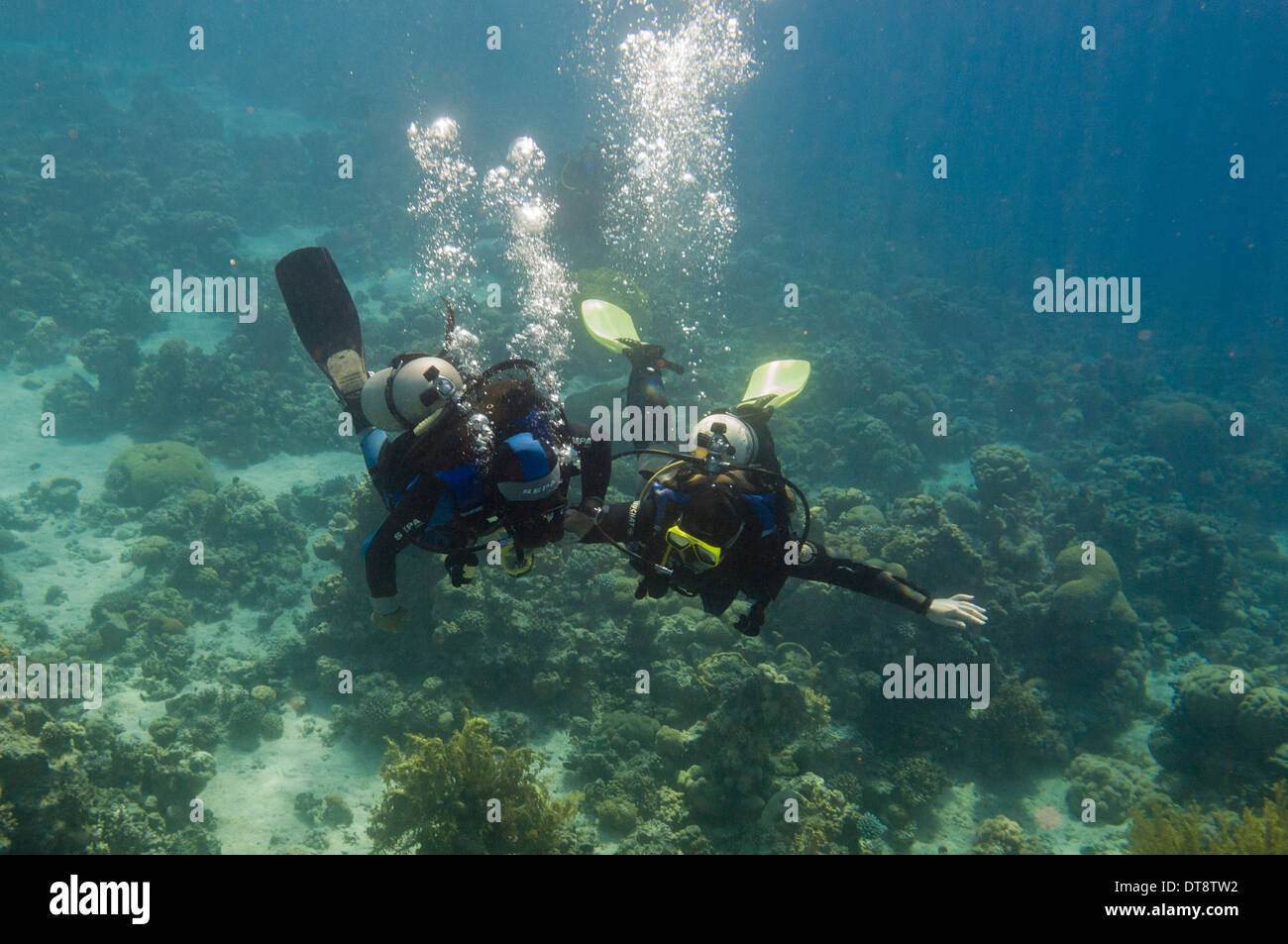 Divers in the Red Sea near Aqaba, Jordan - Stock Image
