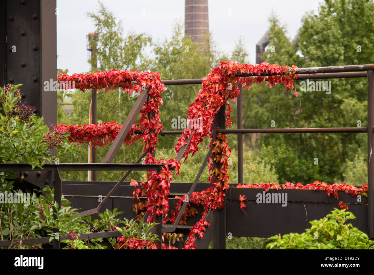 Landschaftpark Duisburg Nord Ivy overgrowing railings - Stock Image