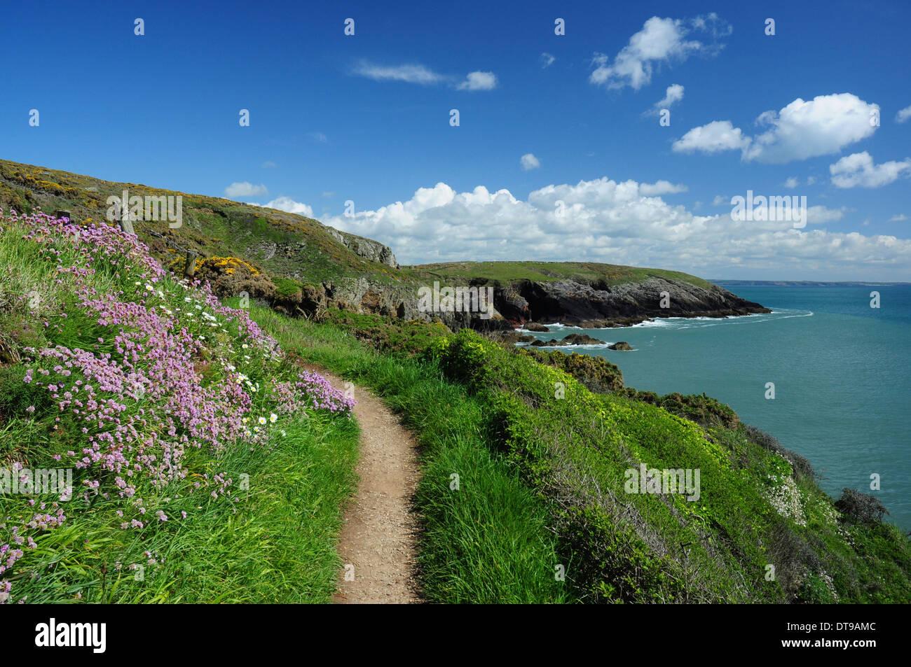 Wales Coast Path, Pembrokeshire, Wales, UK - Stock Image