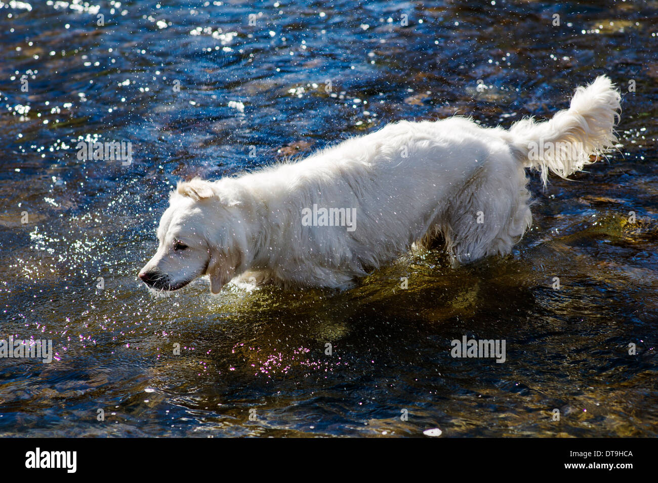 platinum golden snow suv colored retriever in toyota dogs spring