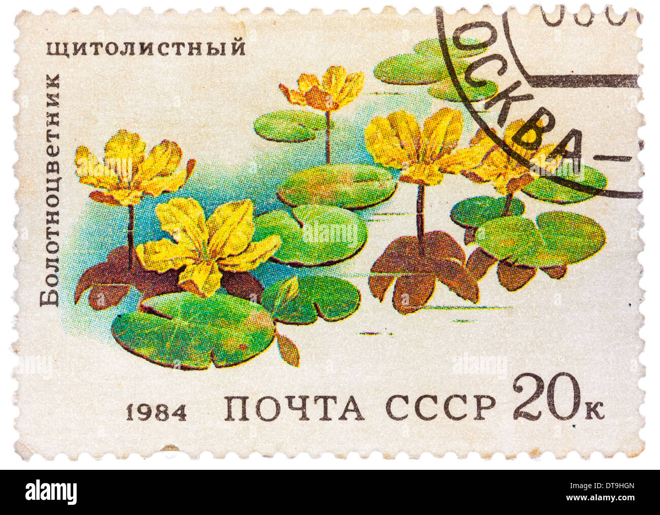 USSR - CIRCA 1984: stamp from the USSR shows image of Belotsvetnik Schitolistny, circa 1984 - Stock Image