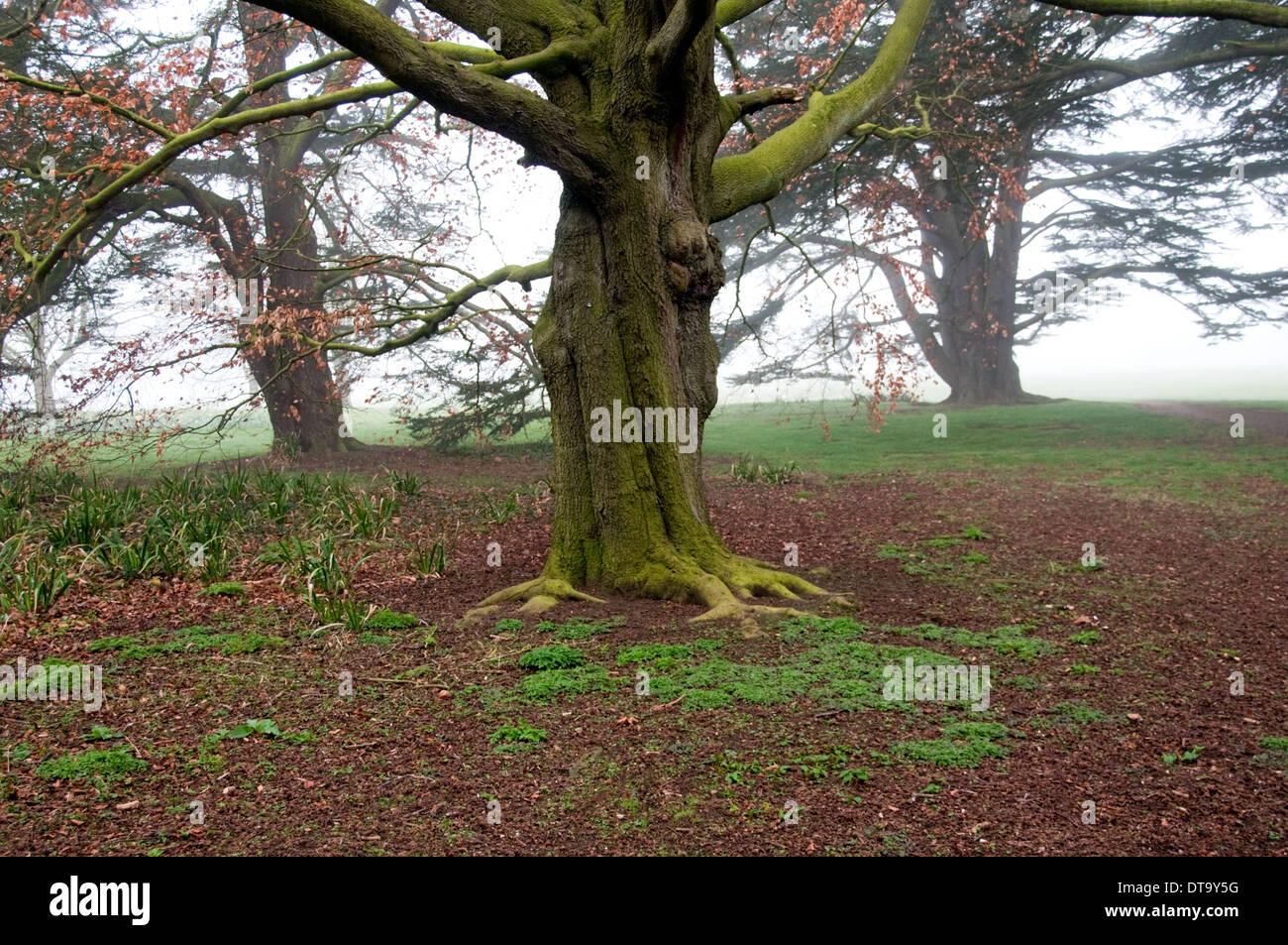 University Parks Tree, Oxford, UK. - Stock Image