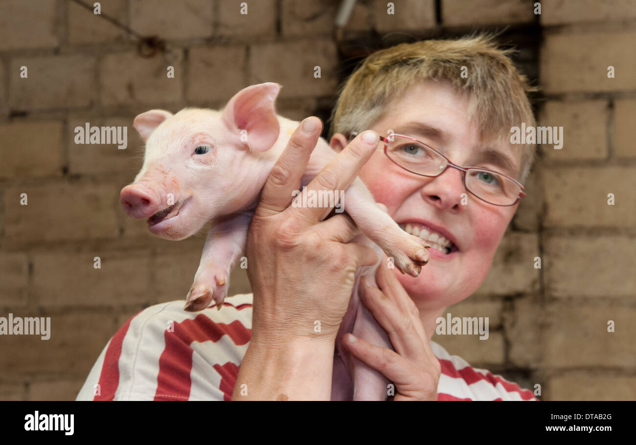 A female farmer holds a one day old piglet in her pigsty. - Stock Image