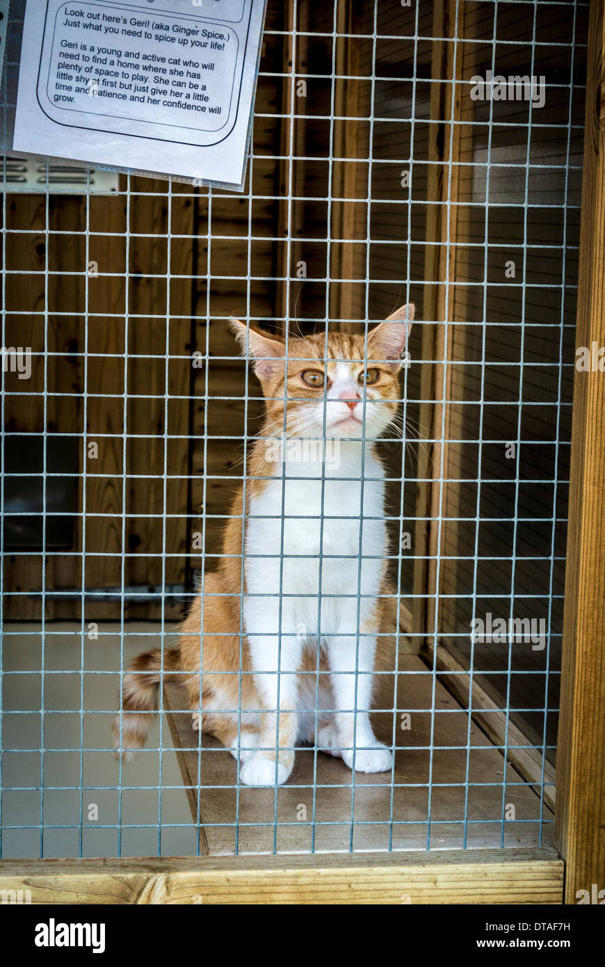Cat in cage at rescue centre - Stock Image