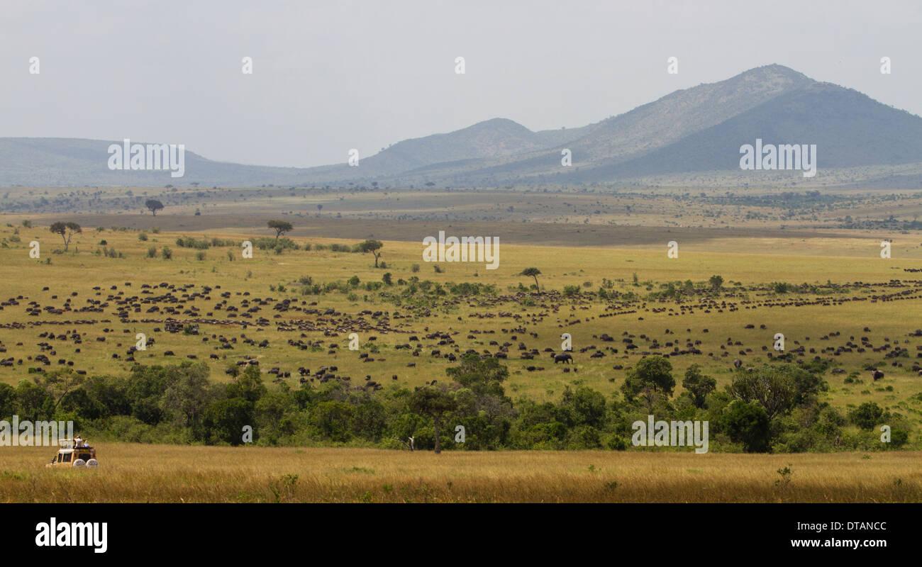Safari during the great migration, Masai Mara Game Reserve, Kenya, Africa - Stock Image
