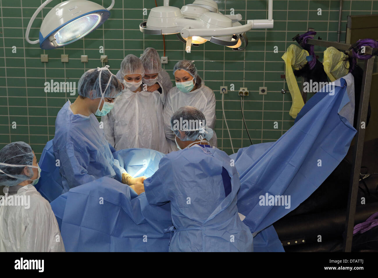 Berlin, Germany, students observe vets in surgery - Stock Image