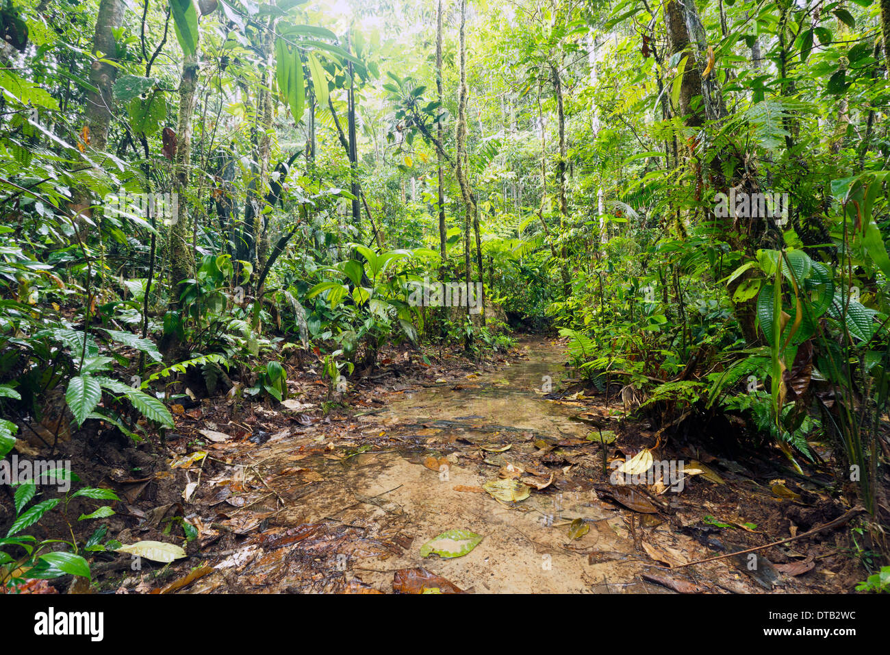 Open muddy clearing in Amazonian Rainforest, Ecuador, during the wet season. - Stock Image