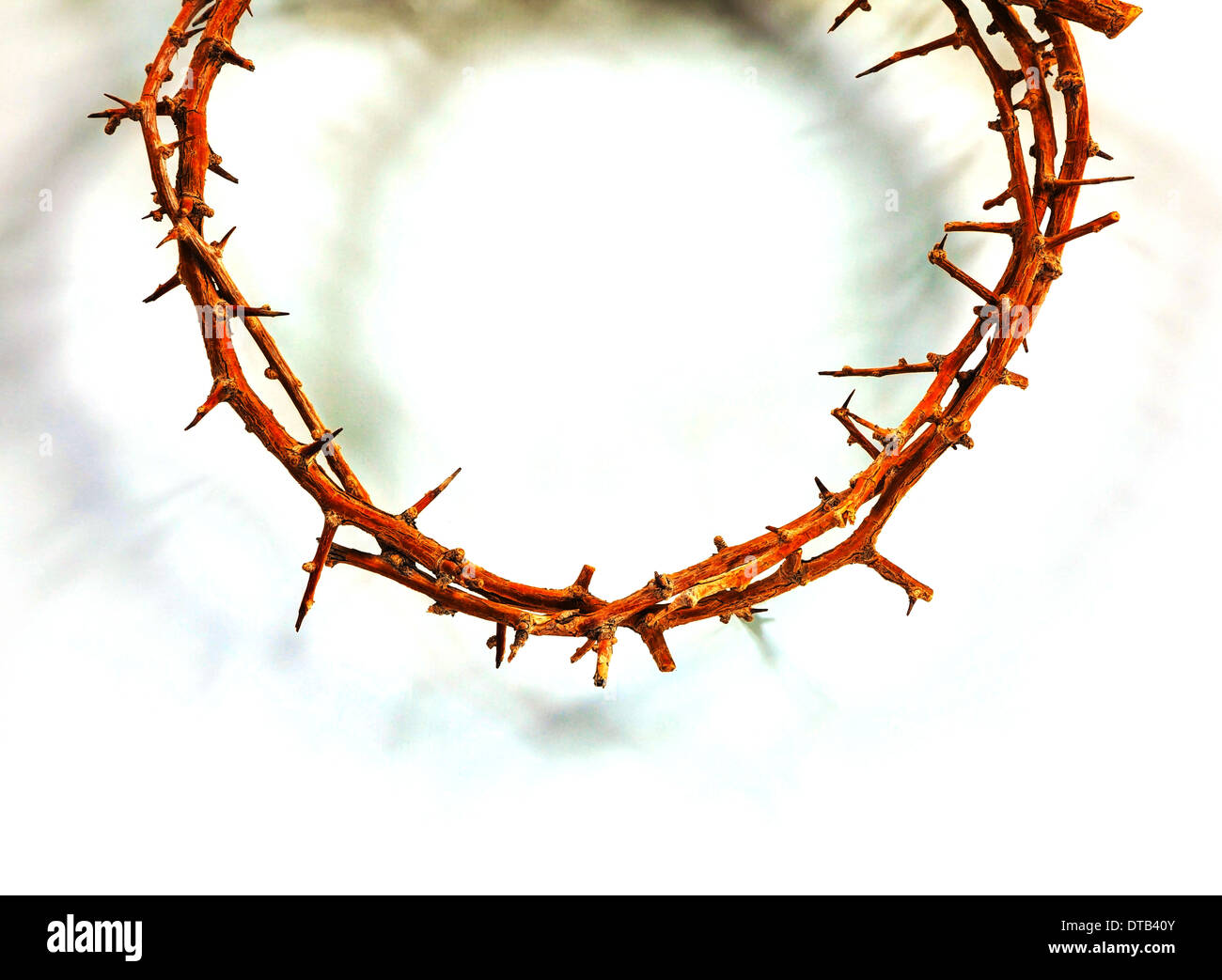Thorn crown close up over the white background - Stock Image