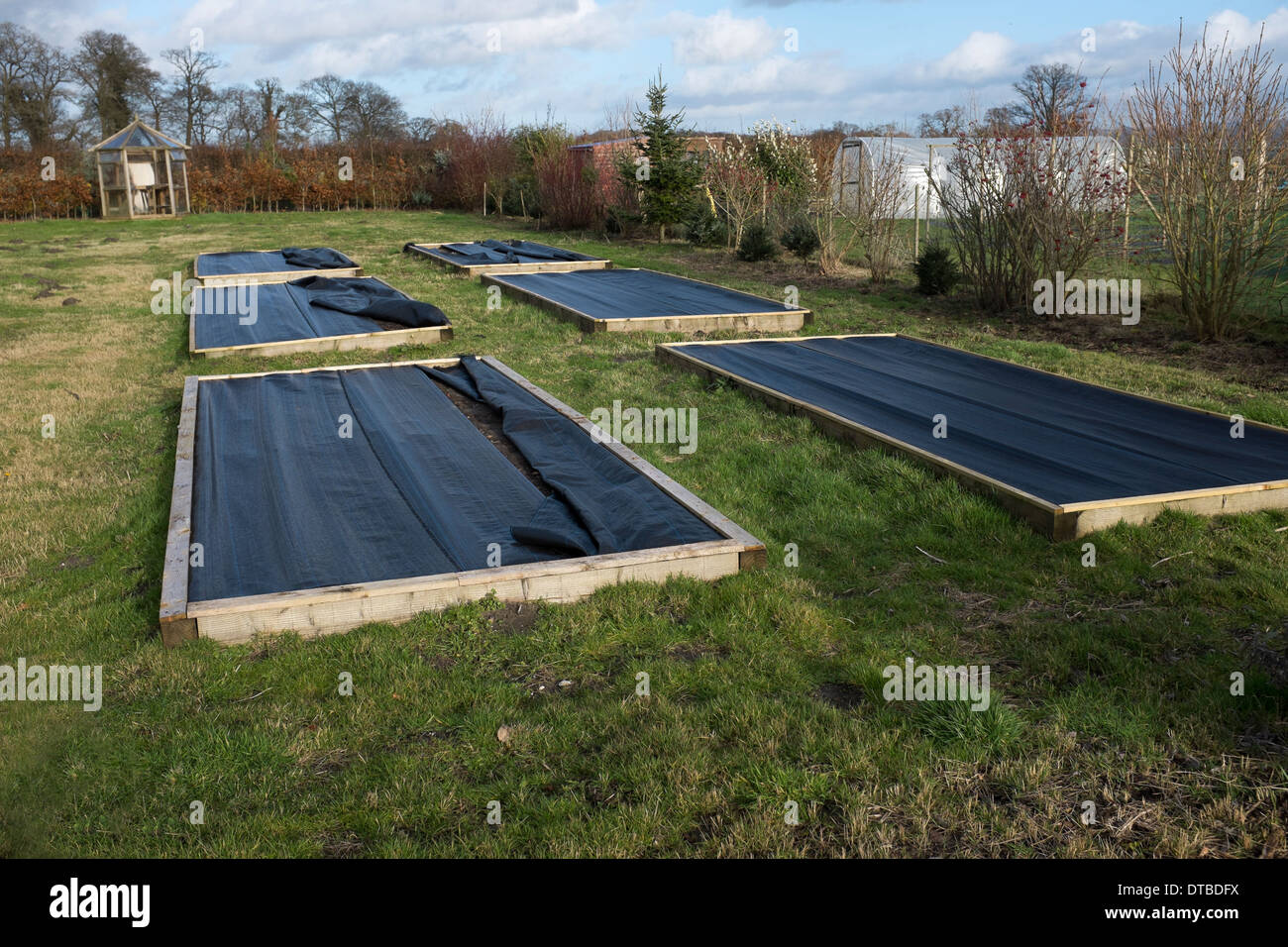 Raised Beds covered with plastic sheets in winter - Stock Image