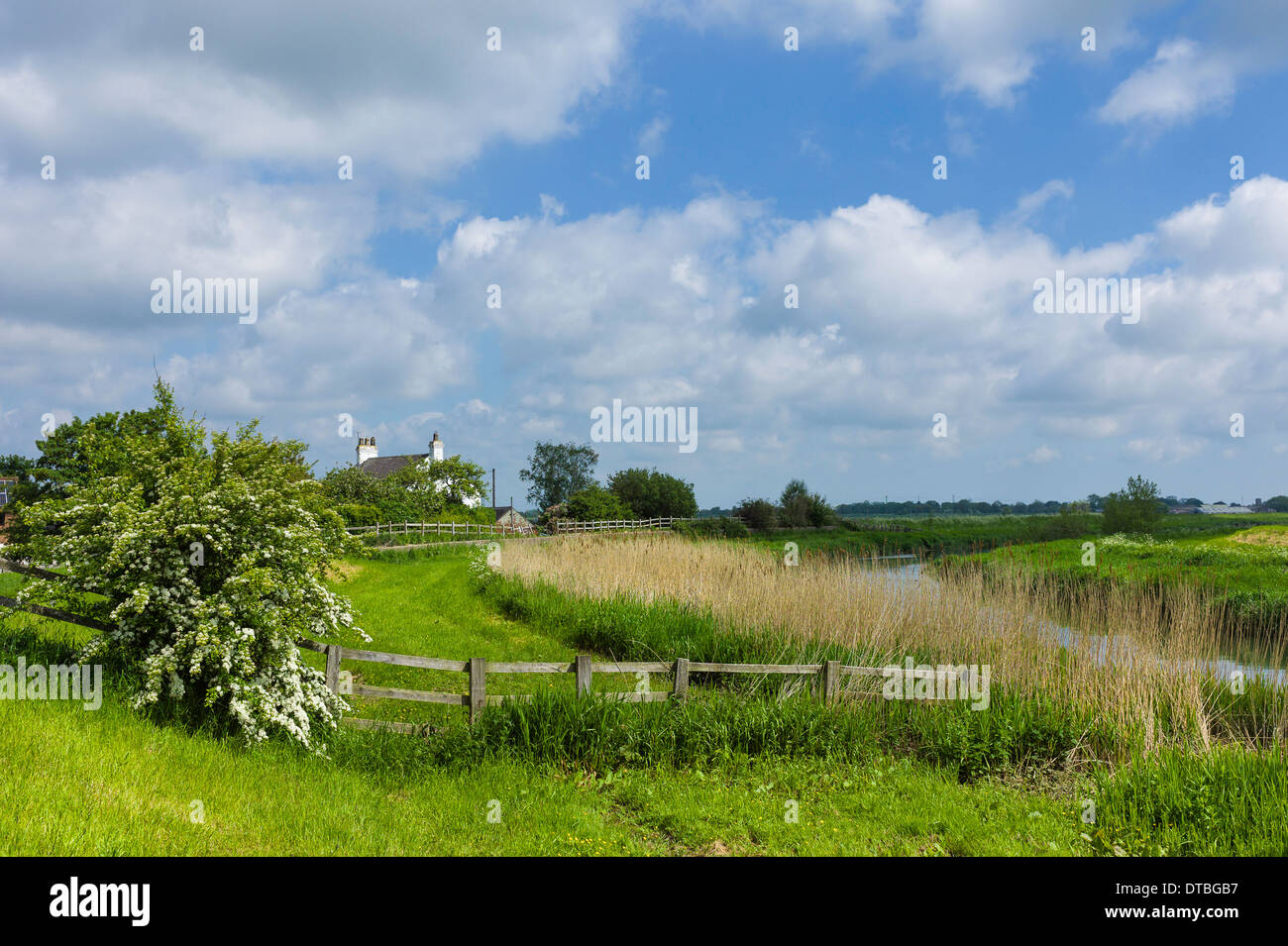 The river Hull on a fine spring morning showing the raised river bank lined with grasses, reeds, and hawthorn tree in bloom. - Stock Image