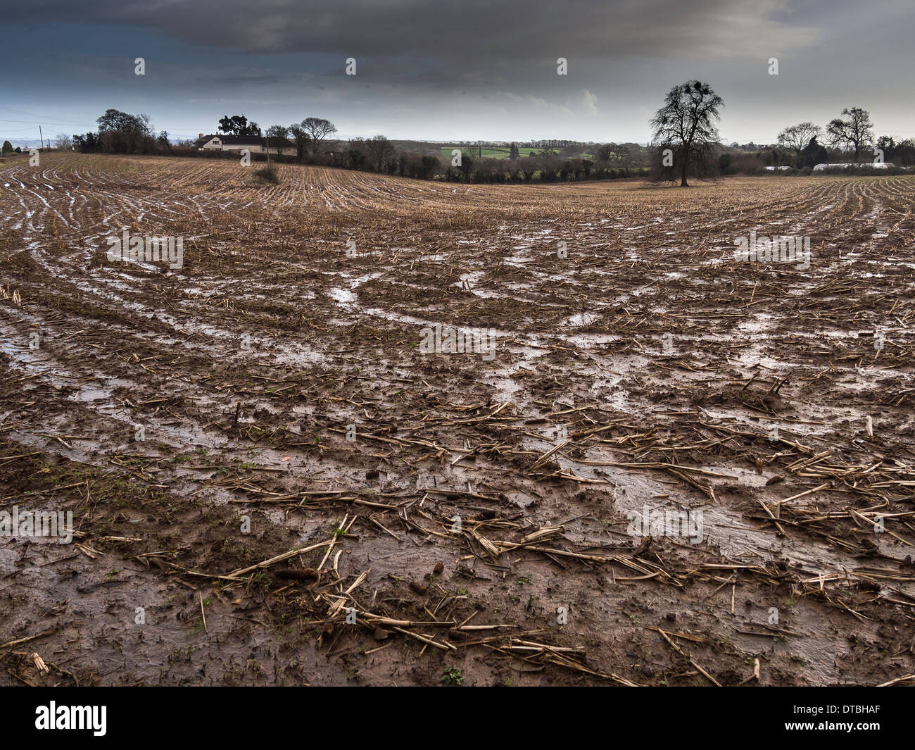Saturated field in Gloucestershire England February 2014 after wettest winter on record Stock Photo