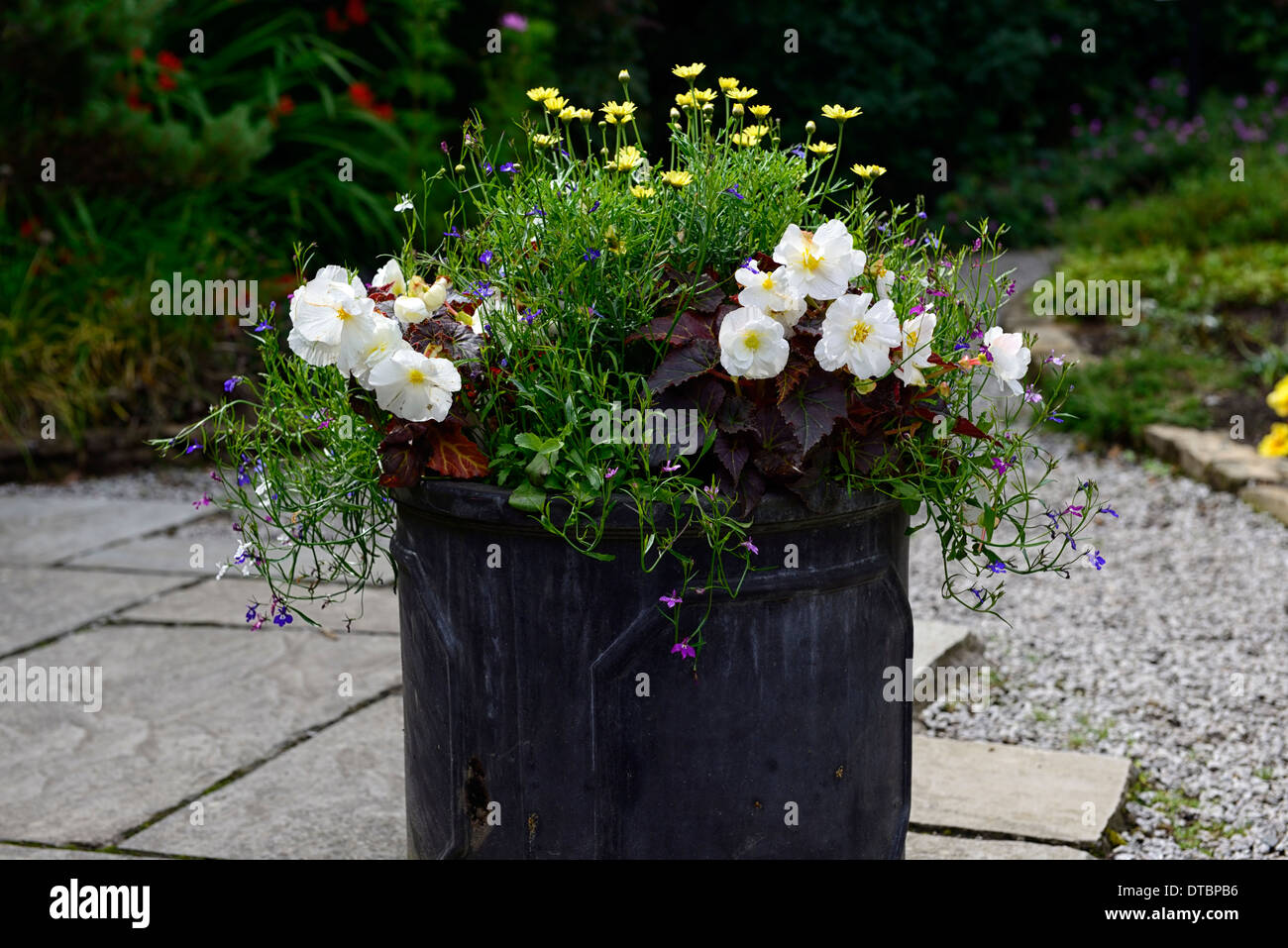 Lead container summer display displays begonia white yellow lead container summer display displays begonia white yellow coreopsis mixed mix planting combination flowers flowering pot mightylinksfo
