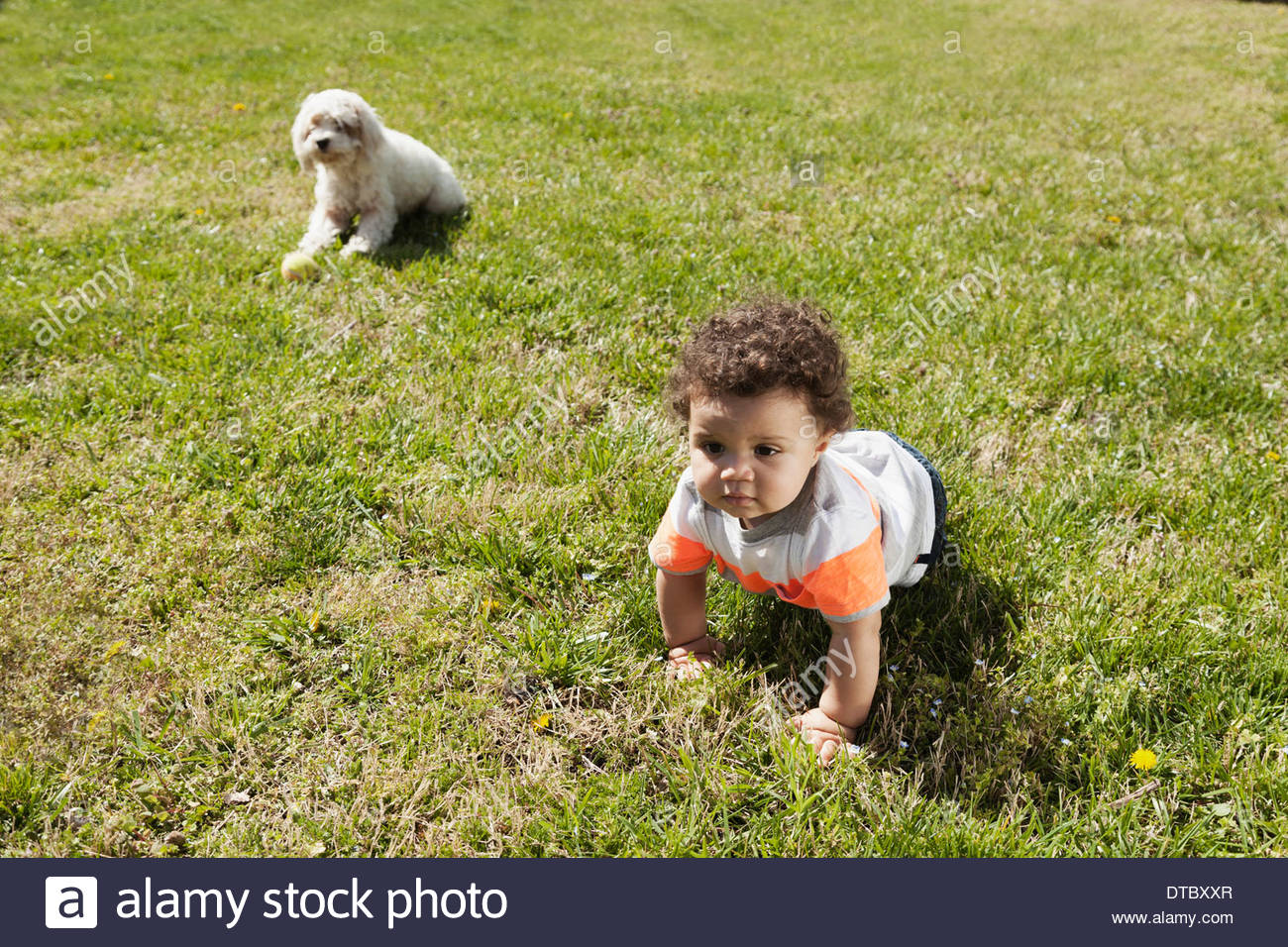 Child crawling on grass, dog in background Stock Photo