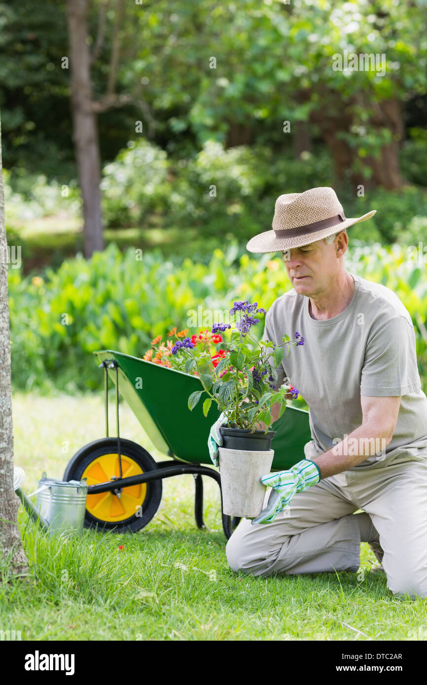 Mature man engaged in gardening - Stock Image