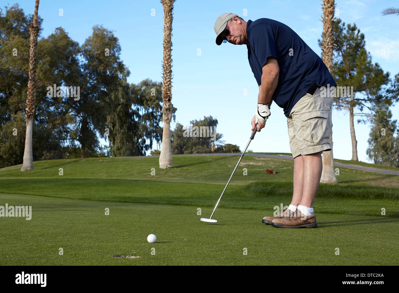 Portrait of mature male golfer taking shot on green - Stock Image