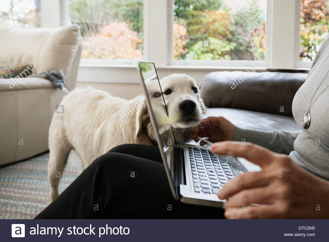 Close up of senior woman shopping online at home - Stock Image