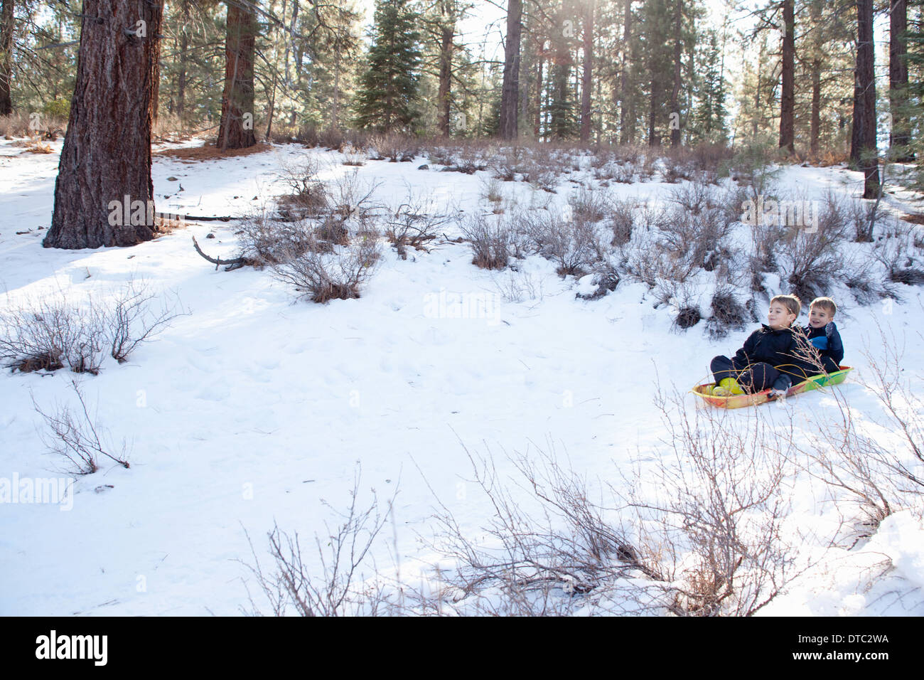 Two young brothers sledging through a forest - Stock Image