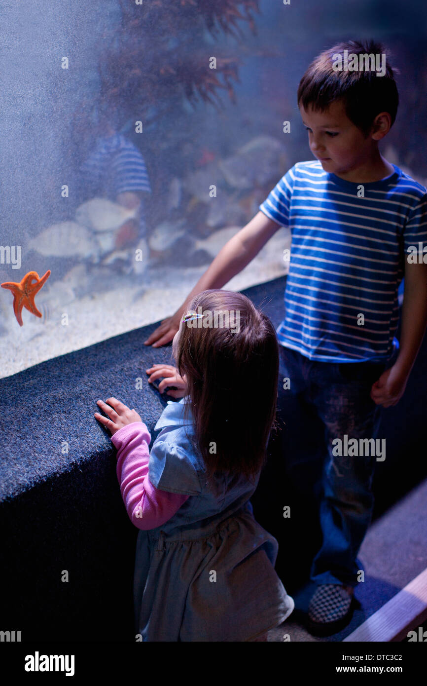 Young brother and sister looking at starfish in aquarium - Stock Image