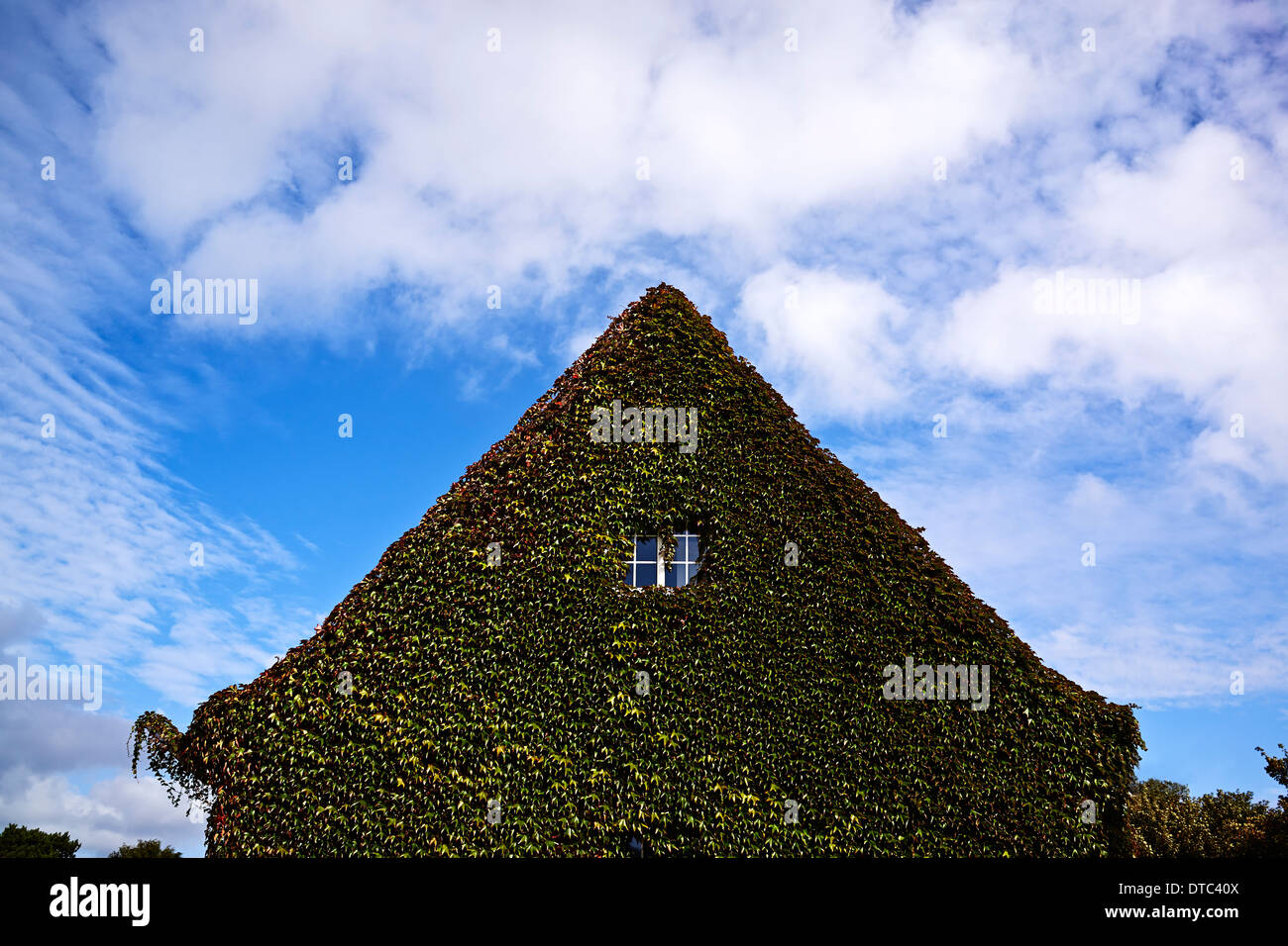 House gable overgrown with ivy - Stock Image