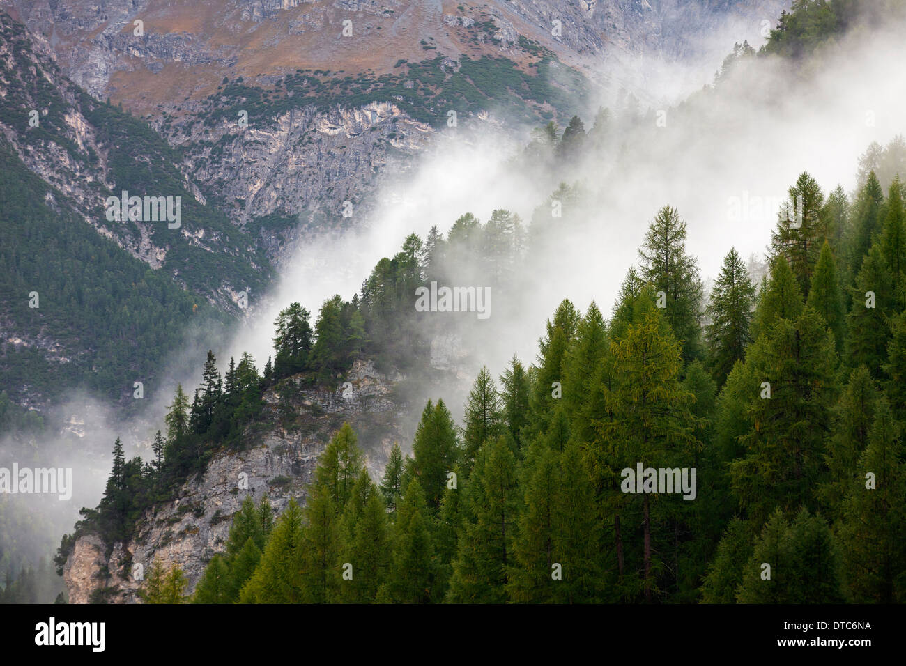 Fog over coniferous forest in the mountains at Val Mingèr, Swiss National Park at Graubünden / Grisons in the Alps, Switzerland - Stock Image