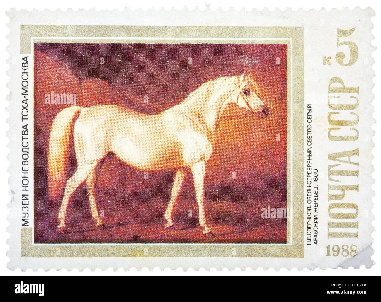 USSR - CIRCA 1988: A stamp printed in USSR shows painting 'Light Gray Arabian Stallion' by Nikolai Sverchkov, series, circa 1988 - Stock Image