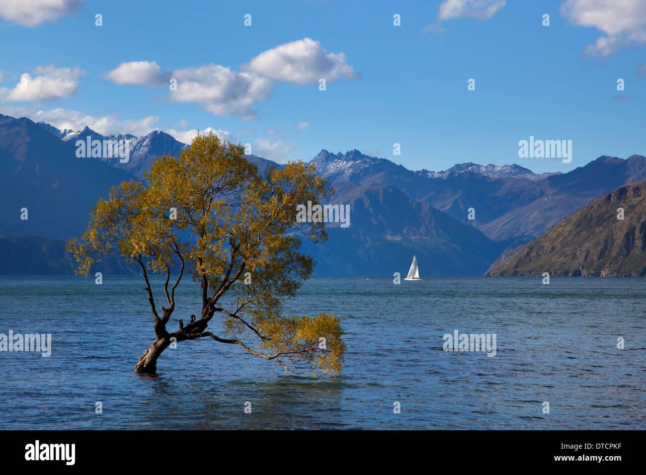 Sailing boats on Lake Wanaka, Wanaka, South Island, New Zealand - Stock Image